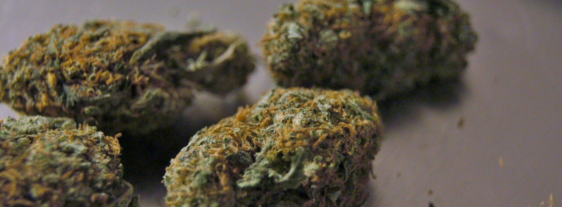 20-latek zatrzymany z narkotykami