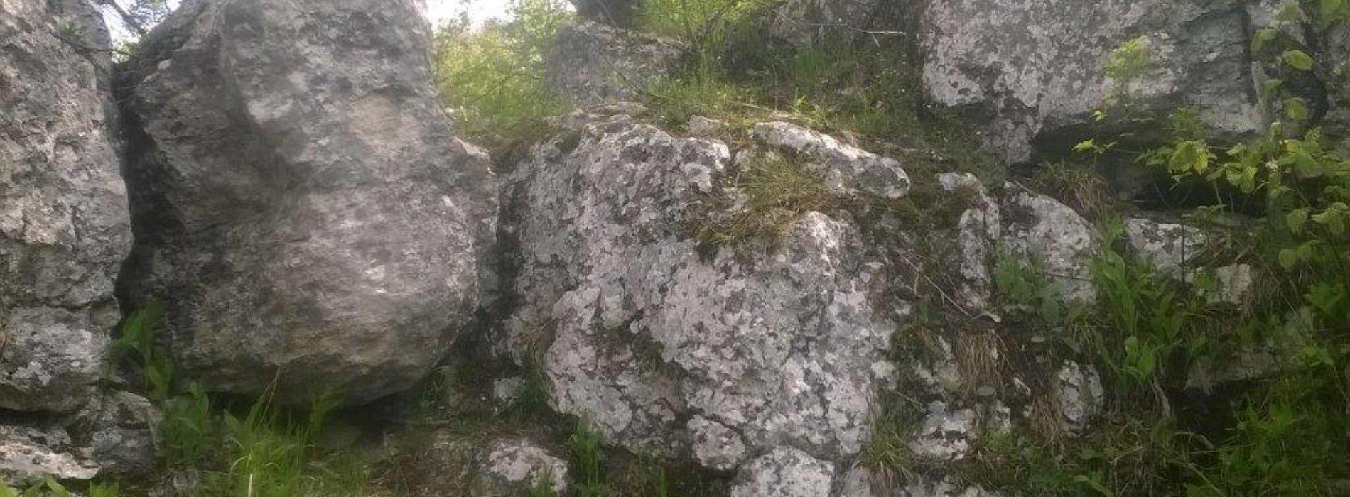 Krzewy konopi indyjskich w polanowickim lesie