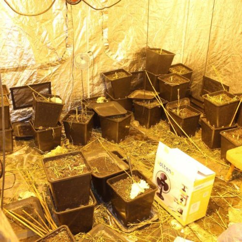 Małopolscy policjanci zlikwidowali nielegalną uprawę konopi indyjskich, która była prowadzona przez dwóch sprawców w bloku mieszkalnym w Bochmi